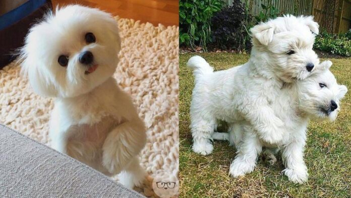 BEST DOG BREED FOR YOU