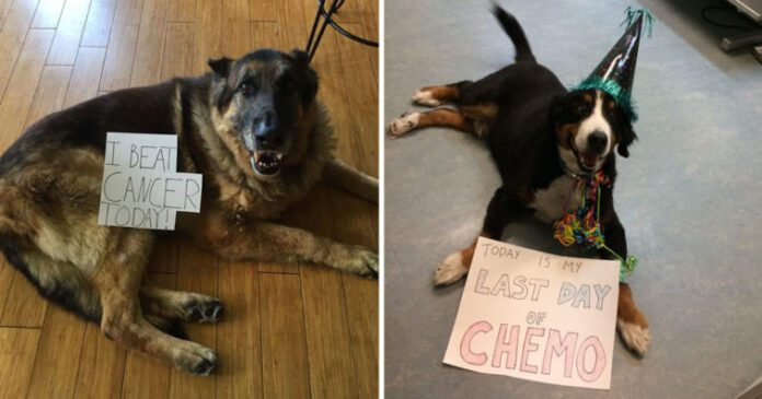Dogs Who Beat Cancer