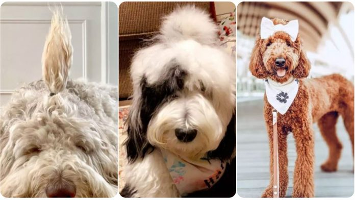 15 Dogs With The Cutest Ponytails