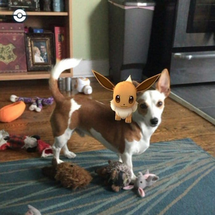 Dogs Totally Obsessed With Pokemon Go