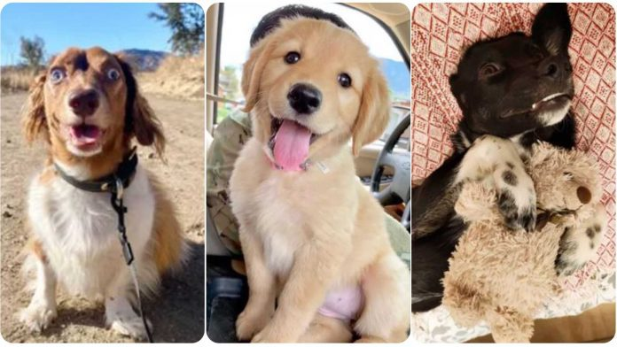 9 Dogs With Completely Adorkable Smiles