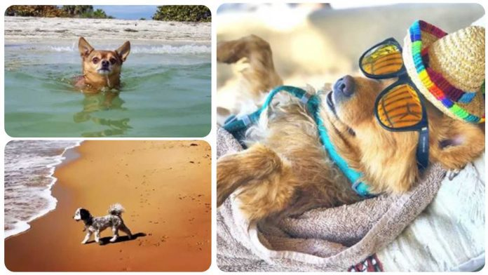 10 Dogs Living Their Best Lives on Vacation