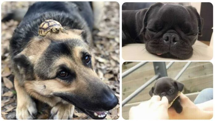 15 Dogs Being Too Cute For Their Own Good