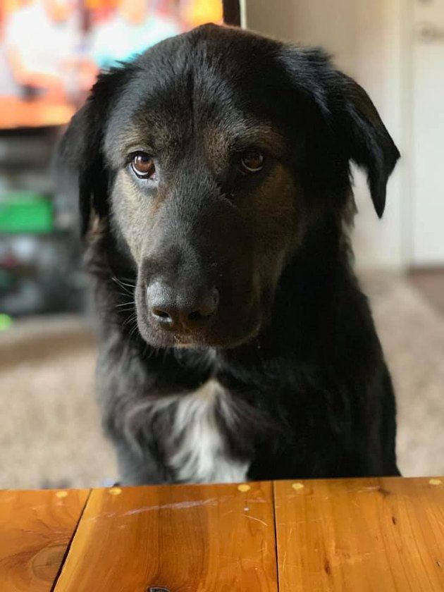 13 Faces Dog Owners Can't Say No To