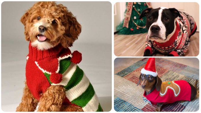Just 12 Adorable Dogs Wearing Christmas Sweaters