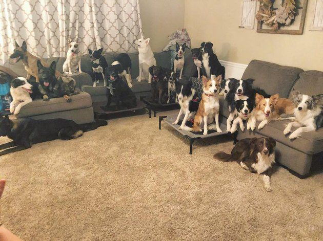 Pet Owners Are Sharing Pictures Of Their Dog Families And We're Melting