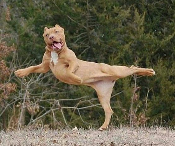 11 Funny Dogs Will Teach You Dance This Week