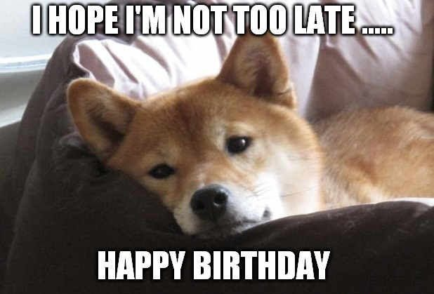 11 Hilarious Akita Inu Memes to Get You Through Life