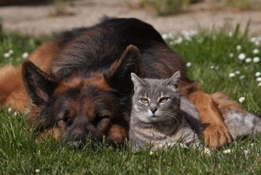 11 Reasons German Shepherds Are Not The Friendly Dogs Everyone Says They Are