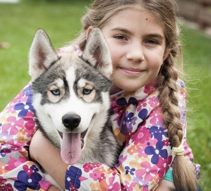 11 Reasons You Should Avoid Huskies At All Costs