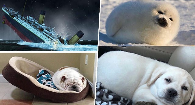 """12 Funny Dog Pictures in """"Look A like Challenge"""""""