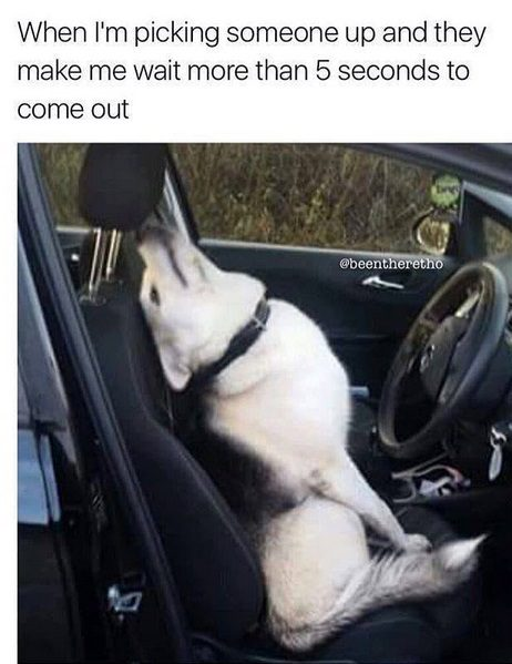12 Funny Husky Memes That Will Make Your Day!
