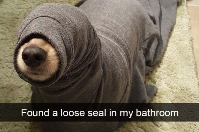 15 Hilarious Labrador Snapchats That Are Impossible Not To Laugh At