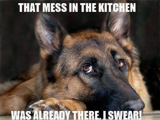 21 German Shepherd Memes That Will Make You Cry Laughing