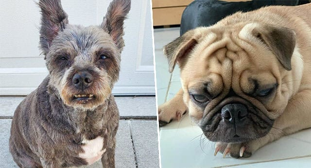 9 Hilarious Pictures Of Dogs With Disapproving Looks