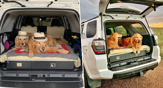 """9 Pictures Of Cool Things From """"I Did It For My Dog"""" Challenge"""