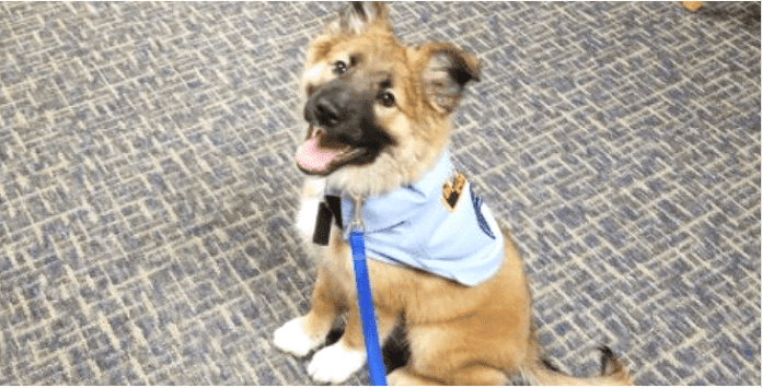 This Adorable Puppy Has Become A Very Special Police Recruit
