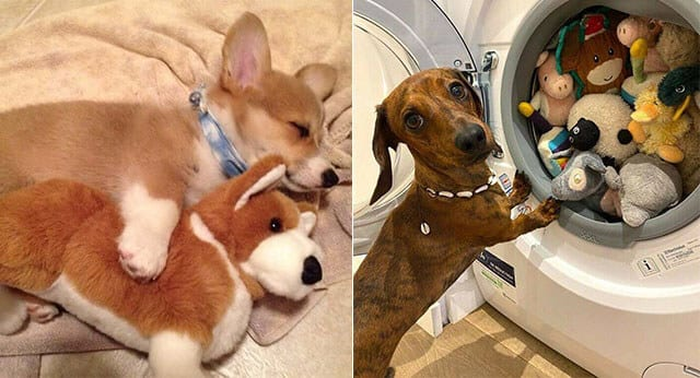 10 Hilarious Pictures Of Dogs Refusing To Part With Their Favorite Toys