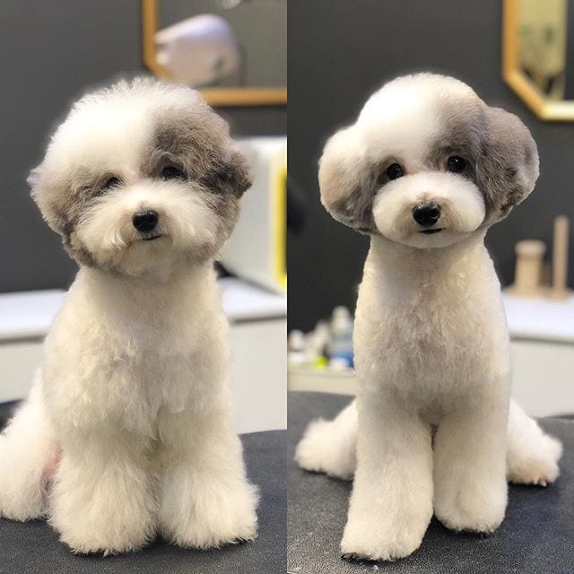 9 Funny Dog Pictures Before And After Haircut