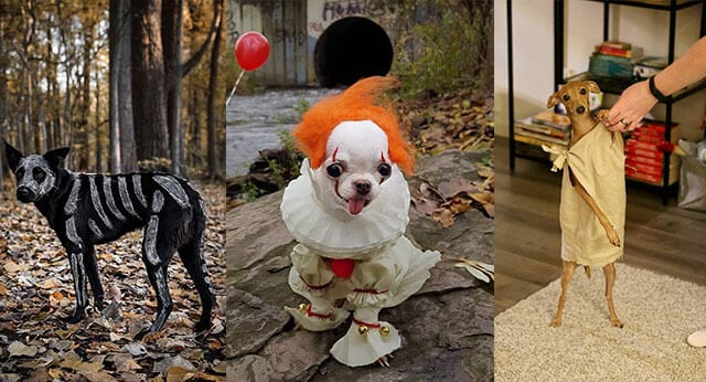 9 Funny Pictures Of Dogs In Halloween Costumes