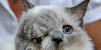 A cat with two faces incredible !!!