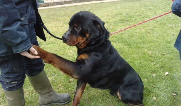 keep your Rottweiler healthy