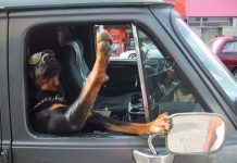 cruising with your Rottweiler