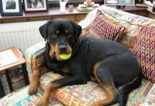 health of your Rottweiler