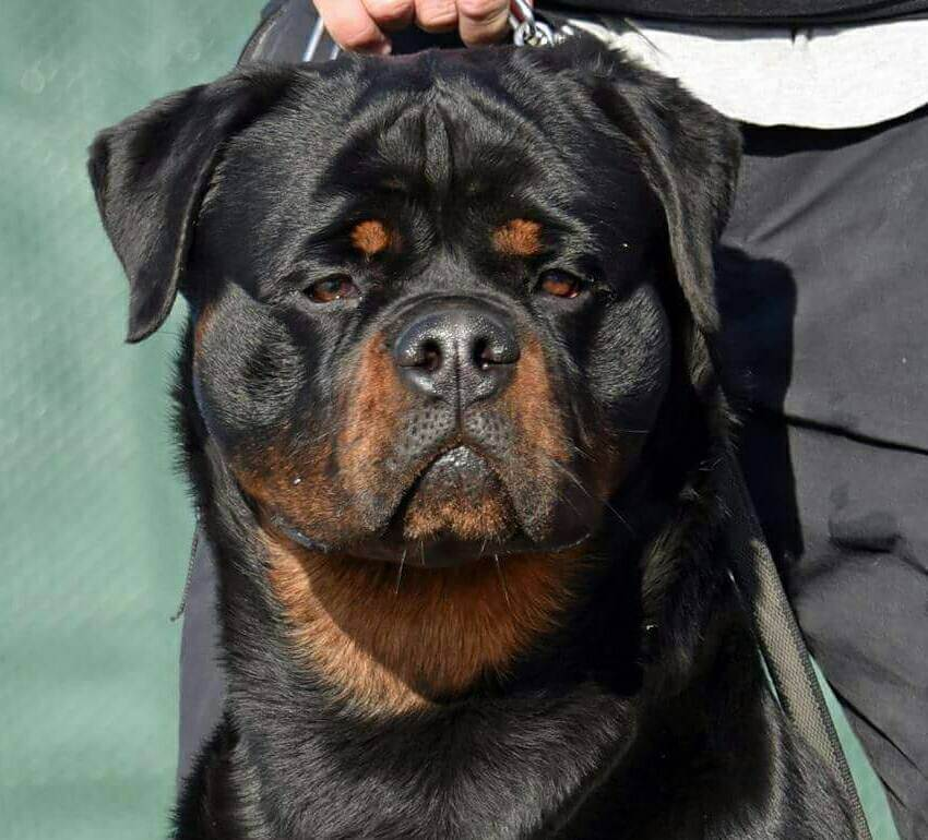 name of your Rottweiler