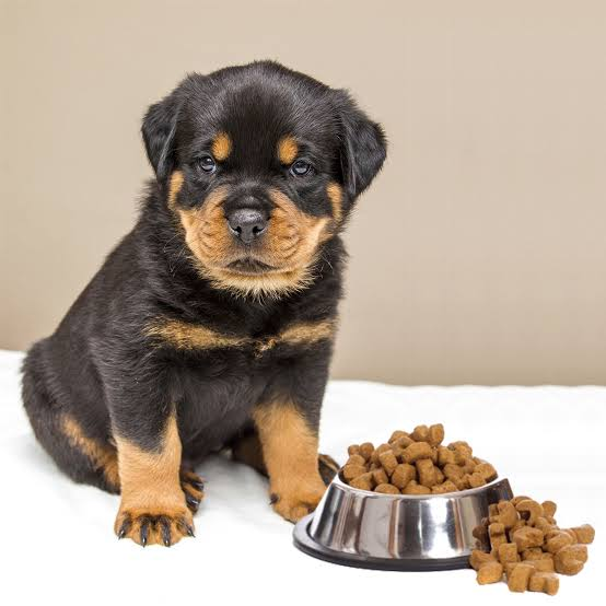 best food for your rottweiler puppy