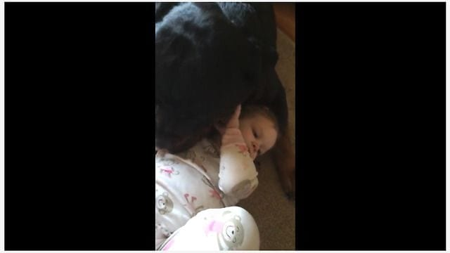baby girl and her rottweiler