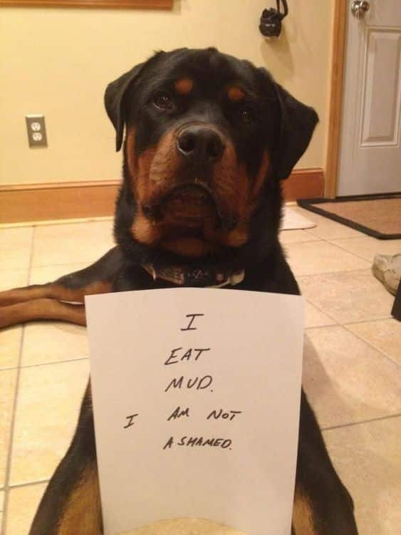 Rottweilers Are Just Hidden Kids