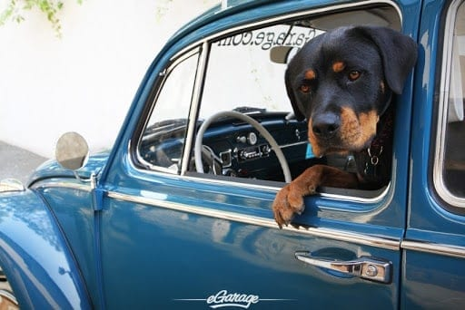 Rottweilers Drive