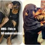 Rottweiler Are Underrated