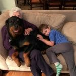 Have Fun with Your Rottweiler