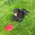 Charming Rottweilers 1